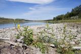 north saskatchewan river 090509_MG_9647