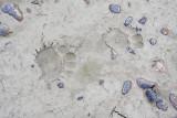 bear tracks 091909_MG_7052