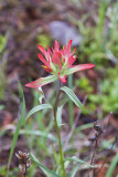 paintbrush 071010_MG_1423