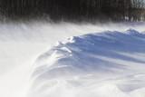 winter scene 012311IMG_5411