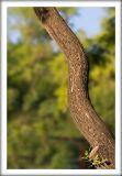 Wooden Snake.jpg