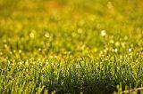 Plain Grass.jpg