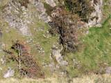 Rowan trees in Rosset Gill