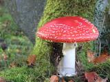 Toadstool, Luckenburn-Fannyside, Clyde