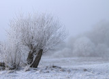 A frosted tree on Loch Lomond NNR