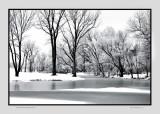 Hoar frost  Andover, KS