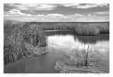 Cheyenne Bottoms  Great Bend, KS