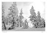 Panoply of snow, Squaw Valley, CA