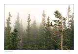 Foggy morning, CO