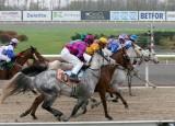 img_8335c.jpg     (Ramonia Arabians Finalhandicap)