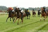 0072e.jpg (The Darley Arabian løb)