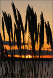 Sunset in the Pampas Grass
