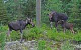 Moose: SERIES