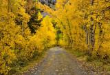 Lundy Lake Road