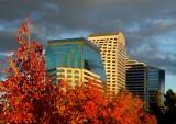 Sacramento Autumn