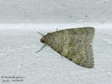Noctuidae - Unknown moth