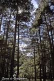 Sierra de Guadarrama - Spain