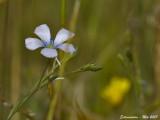 FLOWERS OF EXTREMADURA