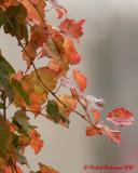 Leaf Peeping 2010