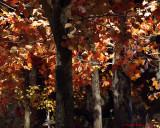 Leaf Peeping 2011-2013