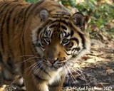 Toronto Zoo 11-02-07