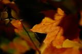 20081002 - Leaves