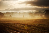 20081009 - Misty Morning...