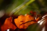 20081026 - Leaf