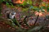 20081101 - Squirrel