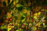 20081101 - Leaves