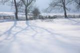 20090202 - Snow 05