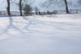 20090202 - Snow 07
