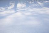 20090202 - Snow 09