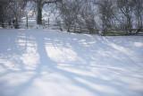 20090202 - Snow 10