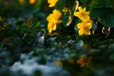 20090426 - Yellow