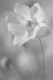 20120913 - Another Churchyard Flower
