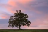 20121001 - Tree