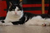 Ragna, my cat-friend-sister-teacher
