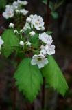 A Tiny Tree Flowering