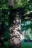 Shadows Climbing A Tree