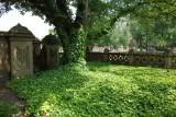 Ivy Tree Central Park NY.jpg
