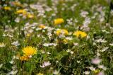 Fields o' weeds