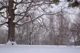 Winter wonderland reprocessed