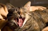 Yawn ii