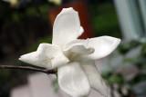 China Spring 2009 06
