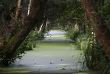 Minsmere RSPB Reserve.JPG
