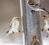 digital_rebel_birds