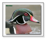 The Wood Duck Gallery