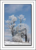 A Winter Scene With A Chilling Hoar Frost