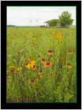 The Montezuma National Wildlife Refuge Is Adorned With Wildflowers